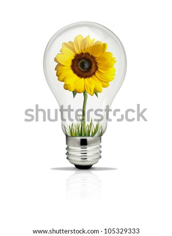 Sunflower growing inside light bulb. - stock photo