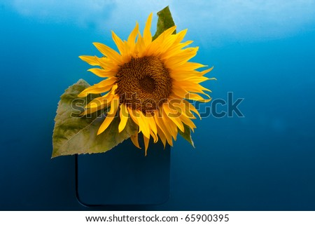 Sunflower growing out of a vehicle's gas tank symbolizing the concept of bio-fuel. - stock photo