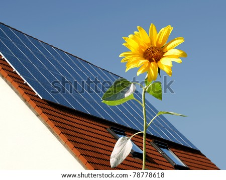 Sunflower in front of a house with solar panels - stock photo