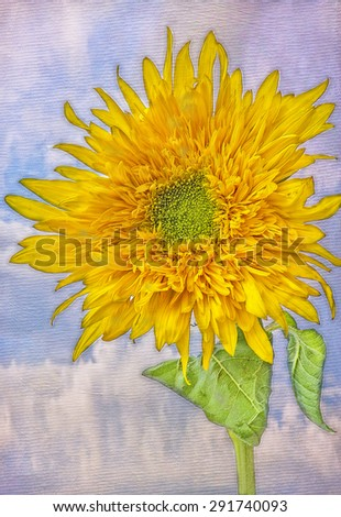 Sunflower painted on textured background,digital oil painting - stock photo