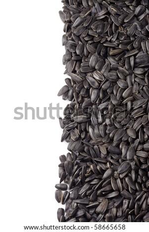 sunflower seed on white background - stock photo