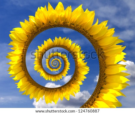 Sunflower spiral against blue sky with clouds - stock photo