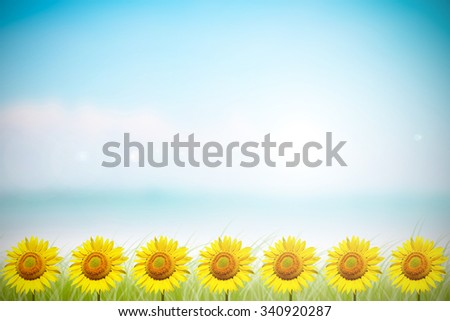 Sunflower with blue sky / sunflower. Abstract blurred on vacation summer ocean beach background . Blue water and sky bright. ocean beach with green grass. Nature wallpaper of sea daytime. - stock photo
