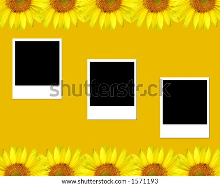 Sunflowers and blank photos - stock photo