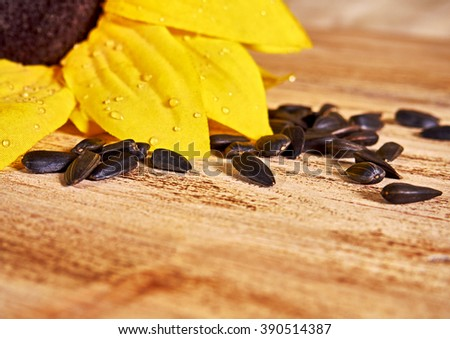 sunflowers and scattered sunflower seeds on wooden background - stock photo