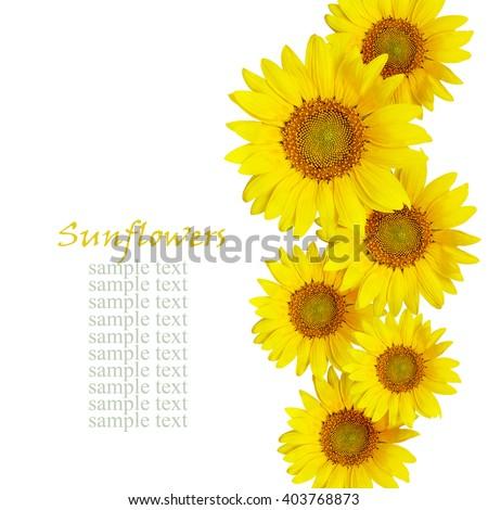 Sunflowers arrangement isolated on white - stock photo