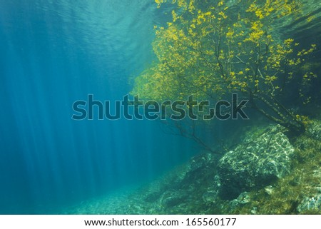 Sunken Nature Park Underwater. Clean water, made from melted snow from Alps in Austria, Gruener See. - stock photo