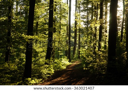 Sunlight and footpath in the forest in Swabia, Germany - stock photo