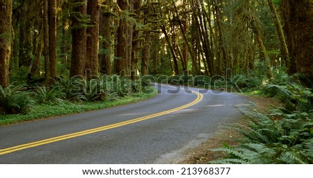 Sunlight can barely filter in through the dense rain forest canopy on this vacation drive - stock photo