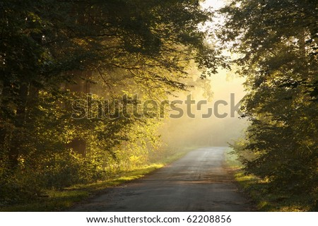 Sunlight entering into the lush deciduous forest on a misty autumn morning. - stock photo