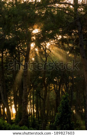 Sunlight filters through the branches of a dense forest - stock photo