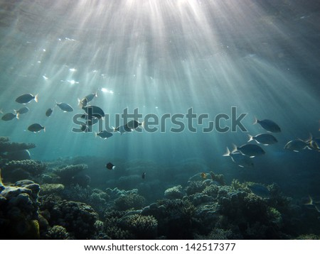 Sunlight, fish and water - stock photo