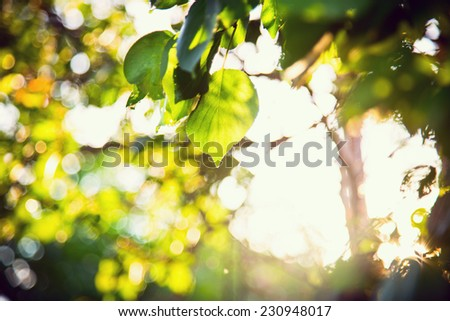 sunlight foliage green trees leaves - stock photo