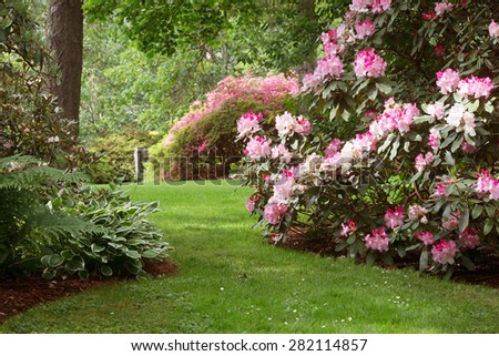 Sunlight highlights rhododendrons on a shady lawn at this beautiful 80 acre park filled with native plants in Eugene Oregon. - stock photo