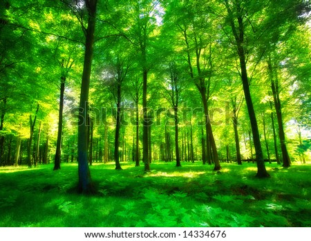 Sunlight in a green and lush forest - stock photo
