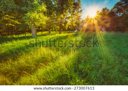 Sunlight In Green Coniferous Forest, Summer Nature - stock photo