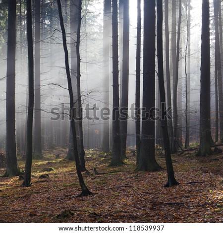 sunlight in misty autumn forest - stock photo
