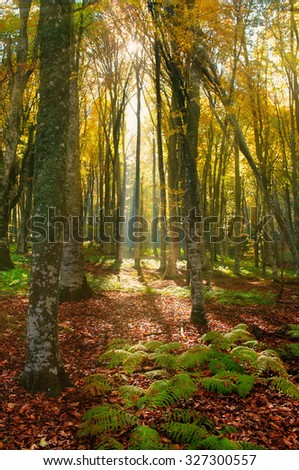 Sunlight in the autumn forest - stock photo
