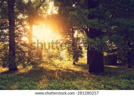 Sunlight on green forest - stock photo