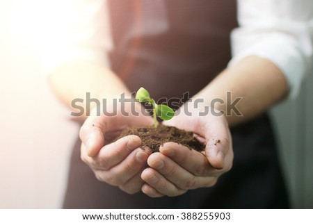 sunlight on man hand holding sprout in palms - stock photo