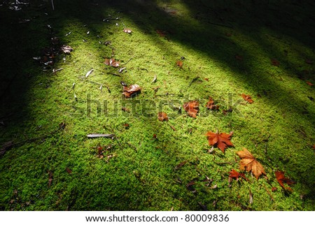 Sunlight on yellow Maple leaf on green field - stock photo