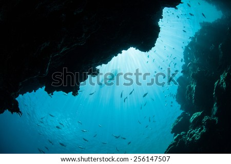Sunlight pours down into a dark underwater grotto on the barrier reef in Palau, Micronesia. Palau is known for its beautiful rock islands and world class scuba diving and snorkeling. - stock photo