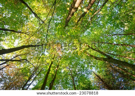 sunlight rays are going through tree crowns - stock photo