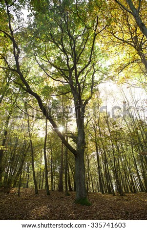 Sunlight shines through tree in autumn in Czech forest - stock photo