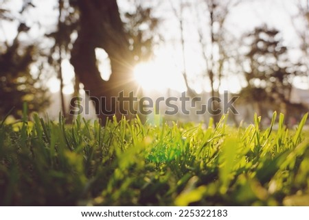 Sunlight shines through trees and onto blades of grass. - stock photo