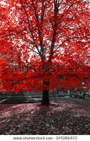 Sunlight Shining through Red Tree in Black and White Landscape at Sunset - stock photo