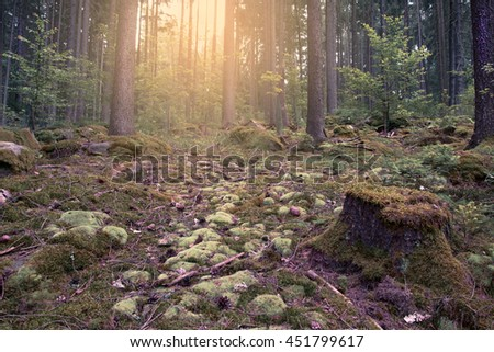 Sunlight shining through the deep forest  - stock photo