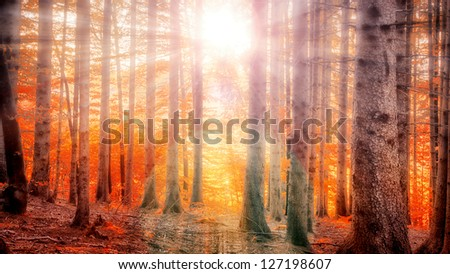 Sunlight sparkling between trees - stock photo