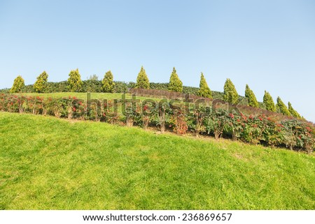 Sunlit park with green grass and blue sky - stock photo