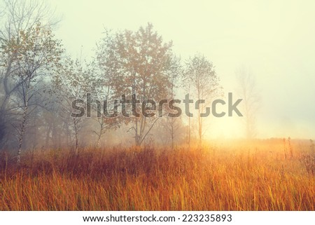 Sunny and misty morning on a rural landscape - stock photo