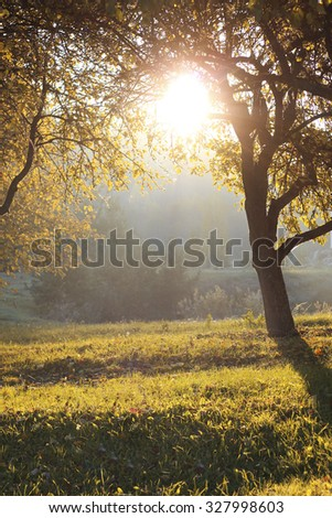 sunny autumn morning beneath an apple tree White frost covered, Latvia - stock photo
