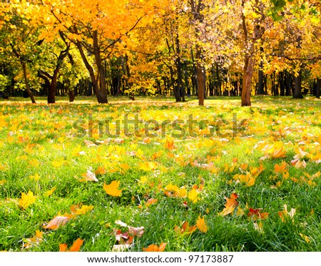 Sunny beautiful alley in autumnal park with vibrant colorful leaves - stock photo