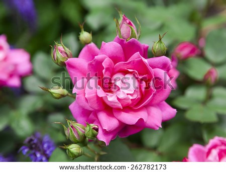 sunny bright colorful pink flower meadow - stock photo