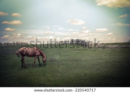 Sunny day in countryside. Summer landscape with horse at pasturage under blue cloudy sky. Nature background in vintage style - stock photo