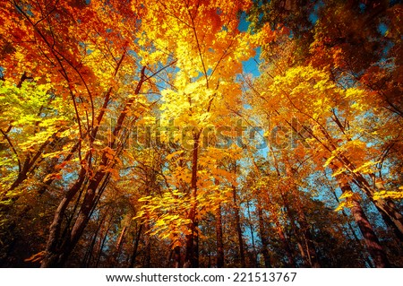 Sunny day in outdoor park with colorful autumn trees. Amazing bright colors of nature landscape - stock photo