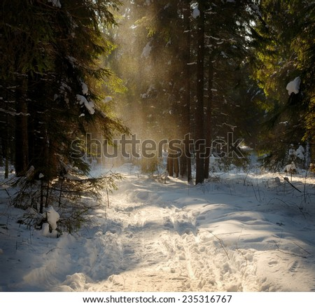 sunny day in the winter forest - stock photo
