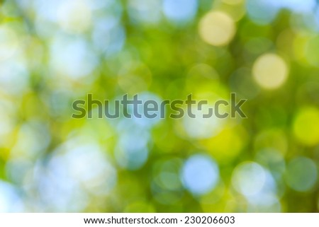 Sunny Day  Natural  Forest Green Bokeh Background - stock photo