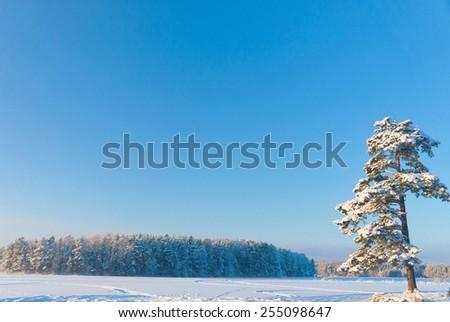 Sunny Glow White Silence  - stock photo