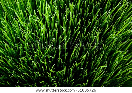 sunny grass. top down view detailed texture - stock photo