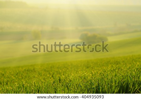 Sunny green grass  blurred field suitable for backgrounds or wallpapers, natural seasonal landscape - stock photo