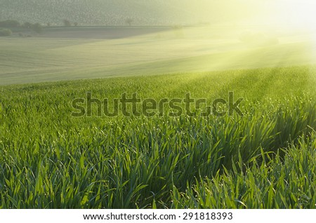 Sunny green grass  field suitable for backgrounds or wallpapers, natural seasonal landscape. Southern Moravia, Czech republic - stock photo