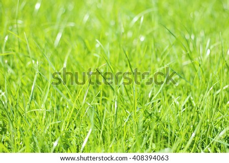 Sunny green grass texture. Bright fresh green grass spring meadow background.  - stock photo
