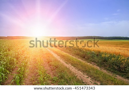 sunny ground road in the rural  field. summer landscape. Idea concept harvest. majestic rural landscape with blue sunny sky with sun. Copy space installation of sunlight on the horizon. creative image - stock photo