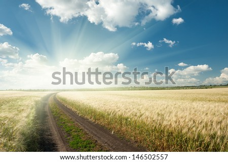 sunny ground road in wheaten field. summer landscape - stock photo
