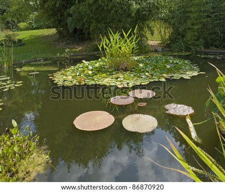 sunny illuminated pond with water lilies at summer time - stock photo