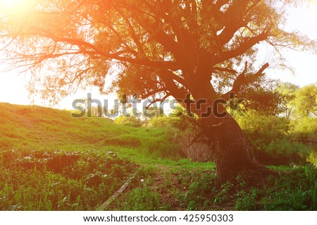 Sunny landscape in the forest - autumn forest landscape with old tree on the foreground - stock photo